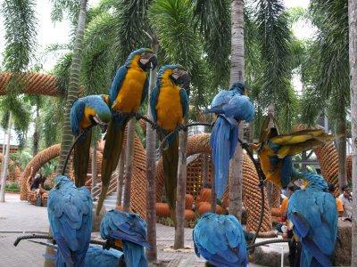Клещи попугай ростов на дону